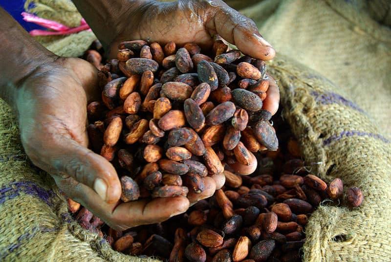 Cocoa farmer holding dried cocoa beansjpg